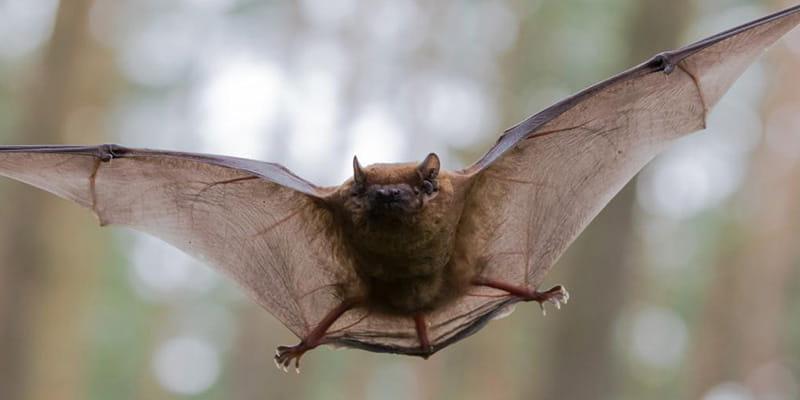 bat control administrations